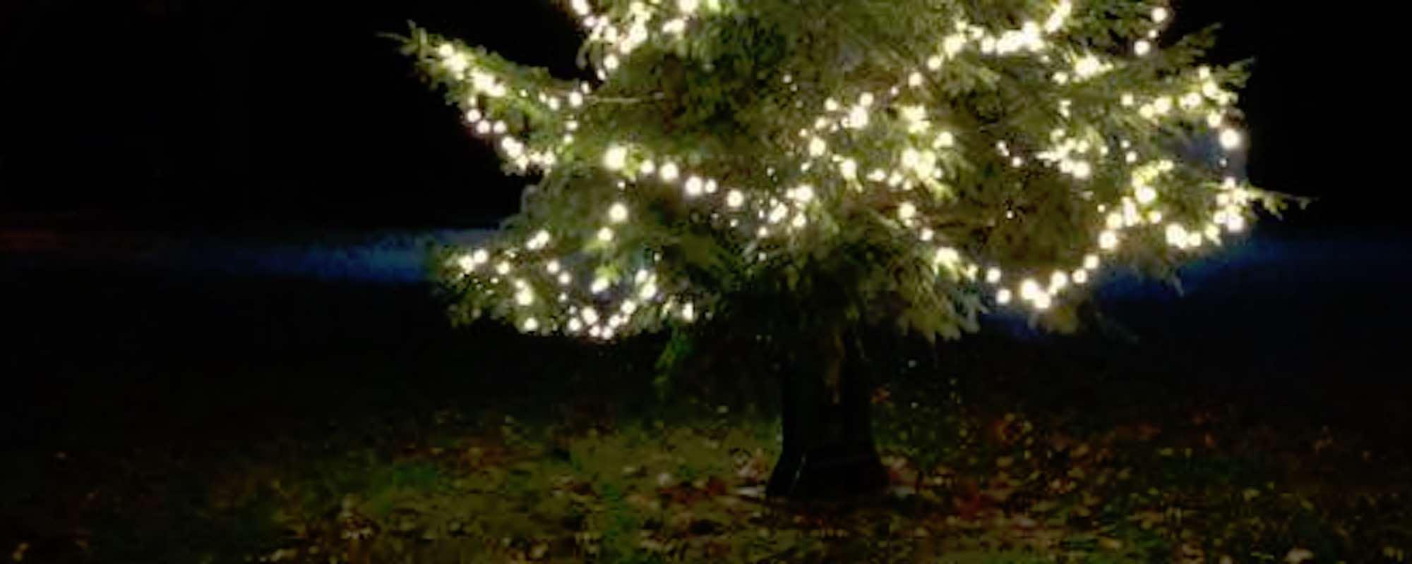 Weihnachtsbaum auf dem Brink